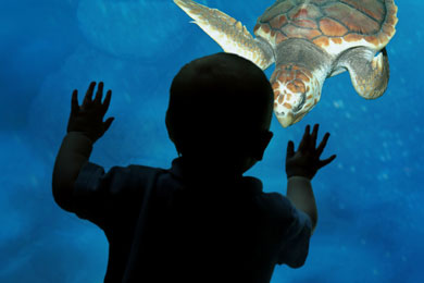 A child looks at a turtle swimming by at the Charleston SC Aquarium